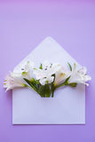 Beautiful tender bouquet of Alstroemeria in envelope on lilac ba Stock Images