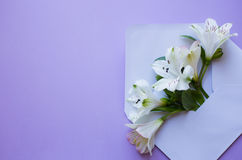 Beautiful tender bouquet of Alstroemeria in envelope on lilac ba Stock Photo