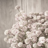 Beautiful tender bouquet of summer meadow flowers Royalty Free Stock Photo