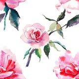 Beautiful tender gentle sophisticated wonderful lovely cute spring floral herbal botanical red powdery pink roses with green leave. S pattern watercolor hand Stock Images