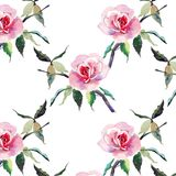 Beautiful tender gentle sophisticated wonderful lovely cute spring floral herbal botanical red powdery pink roses with green leave. S pattern watercolor hand Stock Image