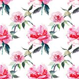 Beautiful tender gentle sophisticated wonderful lovely cute spring floral herbal botanical red powdery pink roses with green leave. S pattern watercolor hand Royalty Free Stock Images
