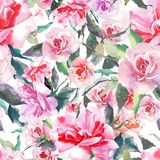 Beautiful tender gentle sophisticated wonderful lovely cute spring floral herbal botanical red powdery pink roses with green leave. S pattern watercolor hand Royalty Free Stock Photography