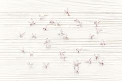 Beautiful tender lilac flowers and petals in light on white wood Royalty Free Stock Photography