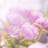 Beautiful tender pink tulips. Spring background Stock Photo
