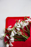 Beautiful tender snowdrops in envelope on white wooden backgroun Stock Image