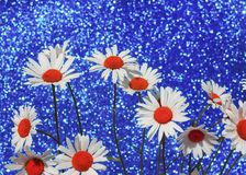 Beautiful tender white daisy flowers  a brilliant holiday blue b Stock Photos