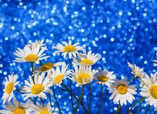 beautiful tender white daisy flowers in a smart bouquet a brilliant holiday blue background with bright circles and shine stock image