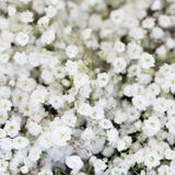 Beautiful tender white flowers background Royalty Free Stock Photos