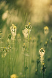 Beautiful tender wildflowers. In morning sun light Royalty Free Stock Photography