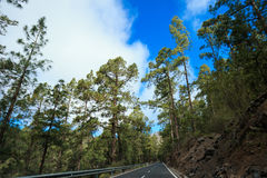 Beautiful Tenerife road - El Teide. Mountain landscape on tropical island Tenerife, Canary in Spain. Beautiful scene on main road on El Teide volcano Royalty Free Stock Photos