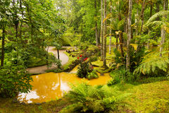 Beautiful Terra Nostra park with water streams and flora diversity. Stock Images