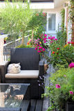 Beautiful terrace with cats and lot of flowers Royalty Free Stock Photo