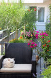 Beautiful terrace with cats and lot of flowers Royalty Free Stock Photos