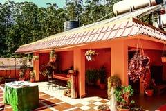 Beautiful terrace garden. Plant beautifulhousetop royalty free stock image