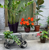 Beautiful terrace with a lot flowers and bicycle Stock Photos