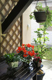 Beautiful terrace with a lot flowers and bicycle Royalty Free Stock Image