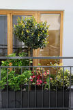 Beautiful terrace with a lot of flowers Stock Images