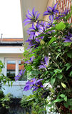 Beautiful terrace with a lot of flowers Royalty Free Stock Photos