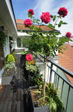 Beautiful terrace with a lot of flowers Stock Photos
