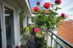 Beautiful terrace with a lot of flowers. Beautiful modern real estate terrace with a lot of flowers royalty free stock images
