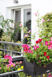 Beautiful terrace with a lot of flowers Stock Photo