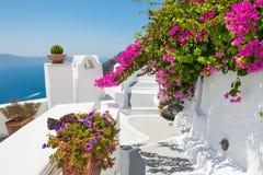 Beautiful terrace with pink flowers, Santorini island, Greece. White architecture on Santorini island, Greece. Beautiful terrace with pink flowers, sea view Royalty Free Stock Photos