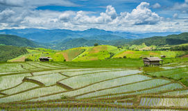 Beautiful Terrace Rice Farm Of Ching Mai, Thailand Stock Photos