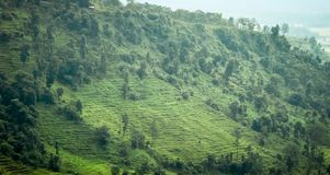 Beautiful terraced field of green tea cultivation surrounded by mountain. Jalpaiguri is a popular tourist destination in West royalty free stock images