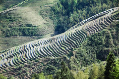 Beautiful terraced fields Stock Photos