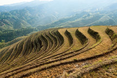 Beautiful terraced fields scenery Royalty Free Stock Image