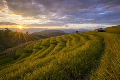 Beautiful terraced rice field in harvesting season. Mae Cham, Chaingmai, Thailand. Stock Photo