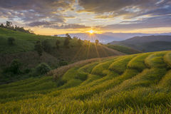 Beautiful terraced rice field in harvesting season. Mae Cham, Chaingmai, Thailand. Stock Image