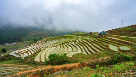 Beautiful terraced rice field in Hoang Su Phi in Vietnam Royalty Free Stock Photo