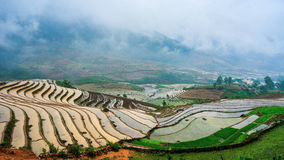 Beautiful terraced rice field in Hoang Su Phi in Vietnam Stock Photography