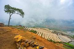 Beautiful terraced rice field in Hoang Su Phi in Vietnam Royalty Free Stock Photography