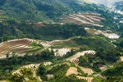Beautiful terraced rice field in Hoang Su Phi in Vietnam. Beautiful terraced rice field in water pulling season Hoang Su Phi, Ha Giang province in Vietnam Stock Images