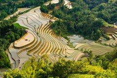 Beautiful terraced rice field in Hoang Su Phi in Vietnam. Beautiful terraced rice field in water pulling season Hoang Su Phi, Ha Giang province in Vietnam Royalty Free Stock Photo