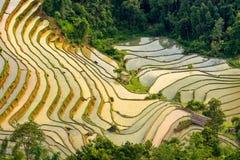Beautiful terraced rice field in Hoang Su Phi in Vietnam. Beautiful terraced rice field in water pulling season Hoang Su Phi, Ha Giang province in Vietnam Royalty Free Stock Photos