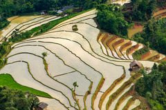 Beautiful terraced rice field in Hoang Su Phi in Vietnam Royalty Free Stock Image
