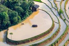 Beautiful terraced rice field in Hoang Su Phi in Vietnam. Beautiful terraced rice field in water pulling season Hoang Su Phi, Ha Giang province in Vietnam Stock Photography