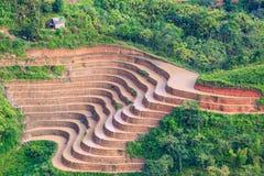 Beautiful terraced rice field in Hoang Su Phi in Vietnam. Beautiful terraced rice field in water pulling season Hoang Su Phi, Ha Giang province in Vietnam Royalty Free Stock Image