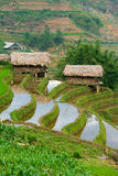 Beautiful terraced rice field in Lao cai province in Vietnam. Beautiful terraced rice field in water pulling season Lao cai province in Vietnam Stock Photography