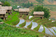 Beautiful terraced rice field in Lao cai province in Vietnam. Beautiful terraced rice field in water pulling season Lao cai province in Vietnam Stock Photos