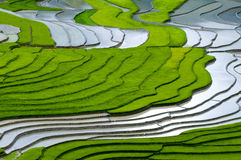 Beautiful terraced rice field in Mu Cang Chai, Vietnam Royalty Free Stock Image
