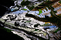 Beautiful terraced rice field in Mu Cang Chai, Vietnam Royalty Free Stock Photography