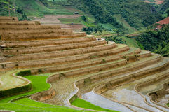 Beautiful terraced rice field in Mu Cang Chai, Vietnam Royalty Free Stock Images
