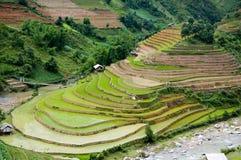 Beautiful terraced rice field in Mu Cang Chai, Vietnam Stock Photo