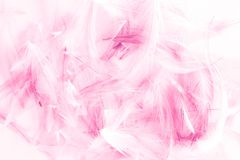 Beautiful texture abstract color white pink and blue feathers isolated on white background pattern and wallpaper stock images