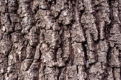 Beautiful texture background of brown oak bark royalty free stock photos